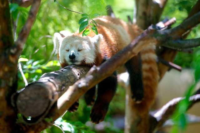 Extension VPN Firefox